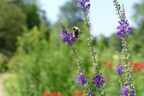 Garden Ecology