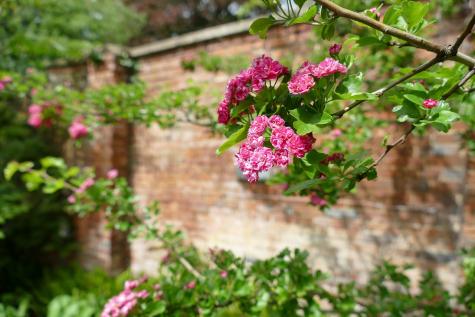 Blossom bed, Hall Garden
