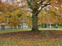 St Hilda's College grounds